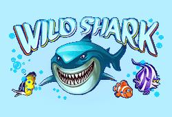 wild symbool shark